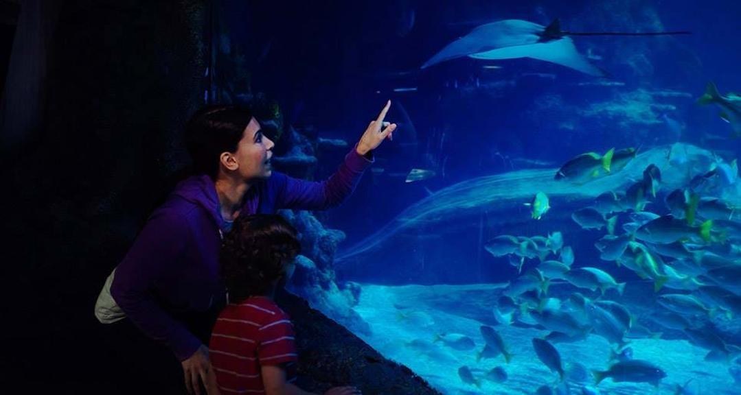 SEA LIFE Centre - London Aquarium, Londres - Kinto