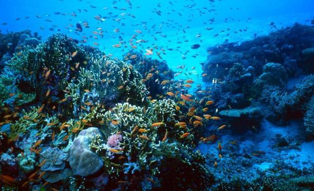 Illes Medes, l'Estartit - Kinto